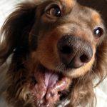 ナツが血便!便の状態を知ることでわかる、愛犬の体調や隠れた病気について。